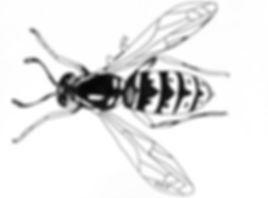 C2C icon ver4.jpg