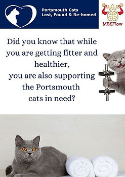 poster portsmouth cats_opt.jpg