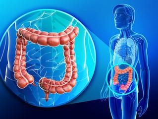 Limpiando y nutriendo nuestro intestino Detoxificación Holistica. Parte II