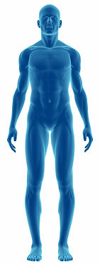 Humen-body.jpg