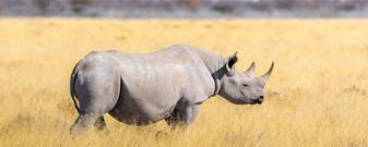 rhino cover.jpg