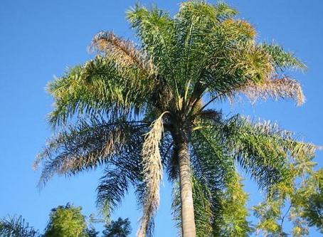 Do you have Cocos Palm Trees?