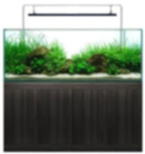 splosht, fish,tank, oceanson,aquarium, pond, display