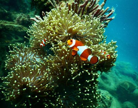 anemone-aquarium-aquatic-1125979.jpg