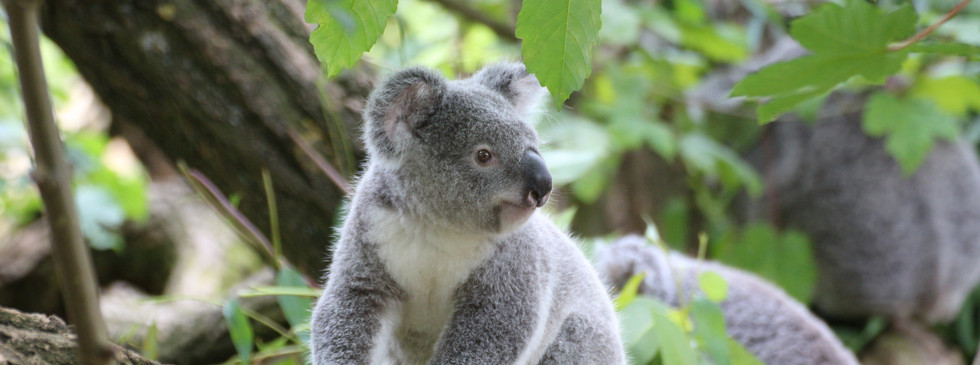 animal-cute-fur-162339.jpg