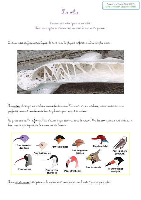 Les ailes0.jpg