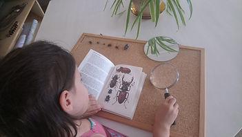 ecologie - apprendre à connaitre la peti