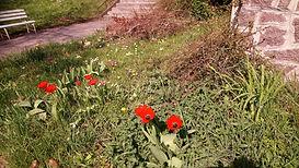 ecologie - laisser une place aux fleurs