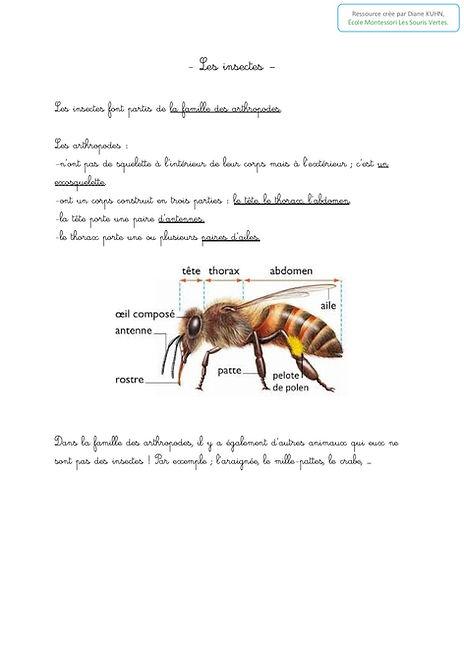 les insectes0.jpg