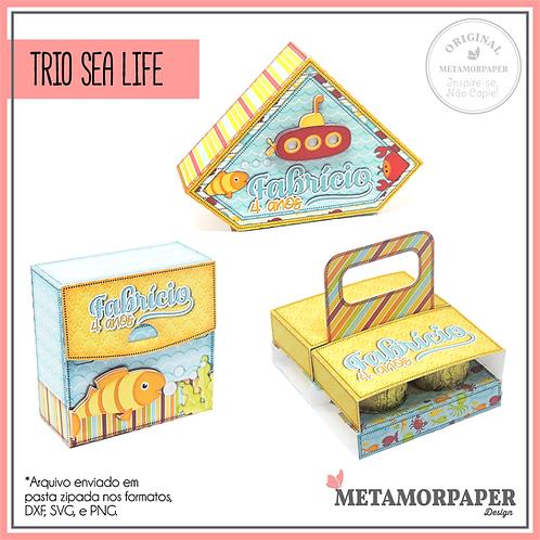 Trio Sea Life