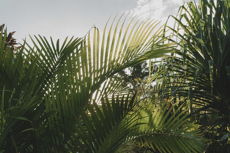 GURU_vegetation_1_rev_ld.jpg.jpg