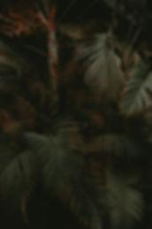 GURU_vegetation_2_rev_ld.jpg.jpg
