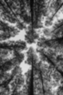 GURU_vegetation_3_rev_ld.jpg.jpg