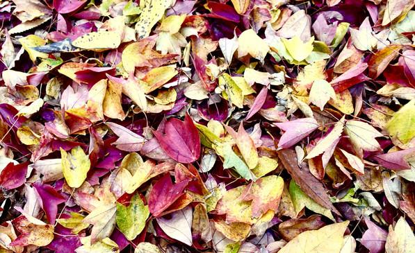落ち葉は美しい
