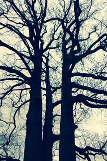 カッケー木