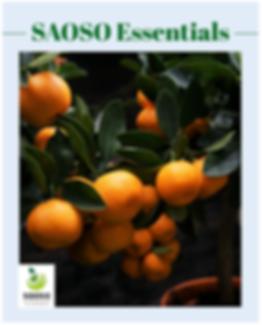 SAOSO Essentials Mag.PNG