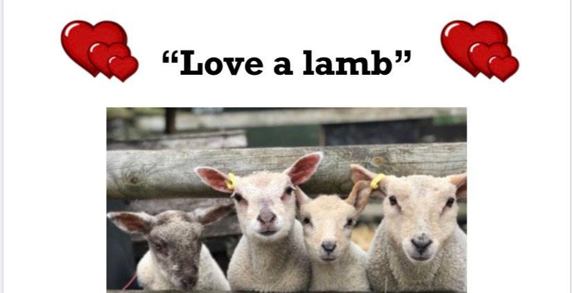 Love a lamb