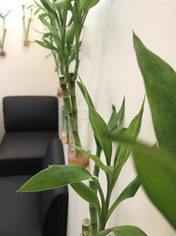 BambooSovenga2.jpg