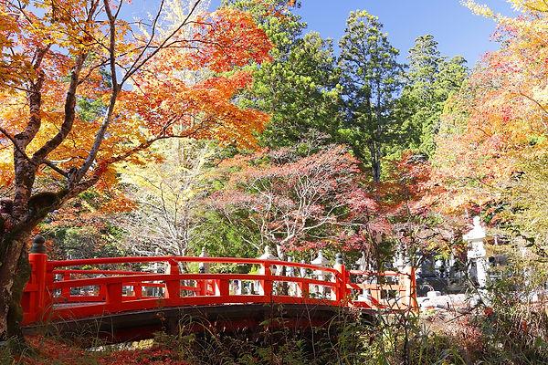 高野山の紅葉 AC写真.jpg