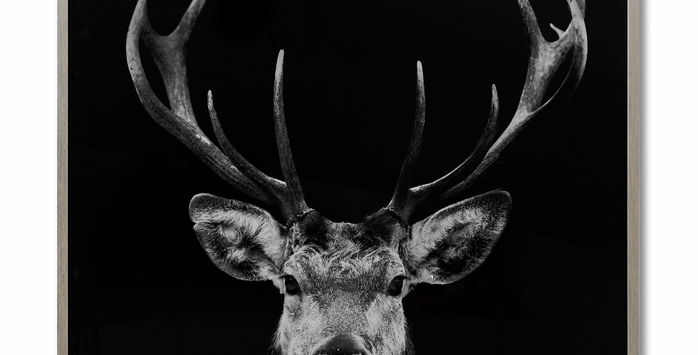 Moody Stag Image on Glass with Silver Frame