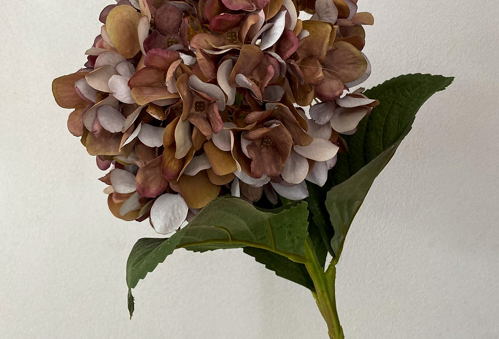 Autumn Coffee Hydrangea