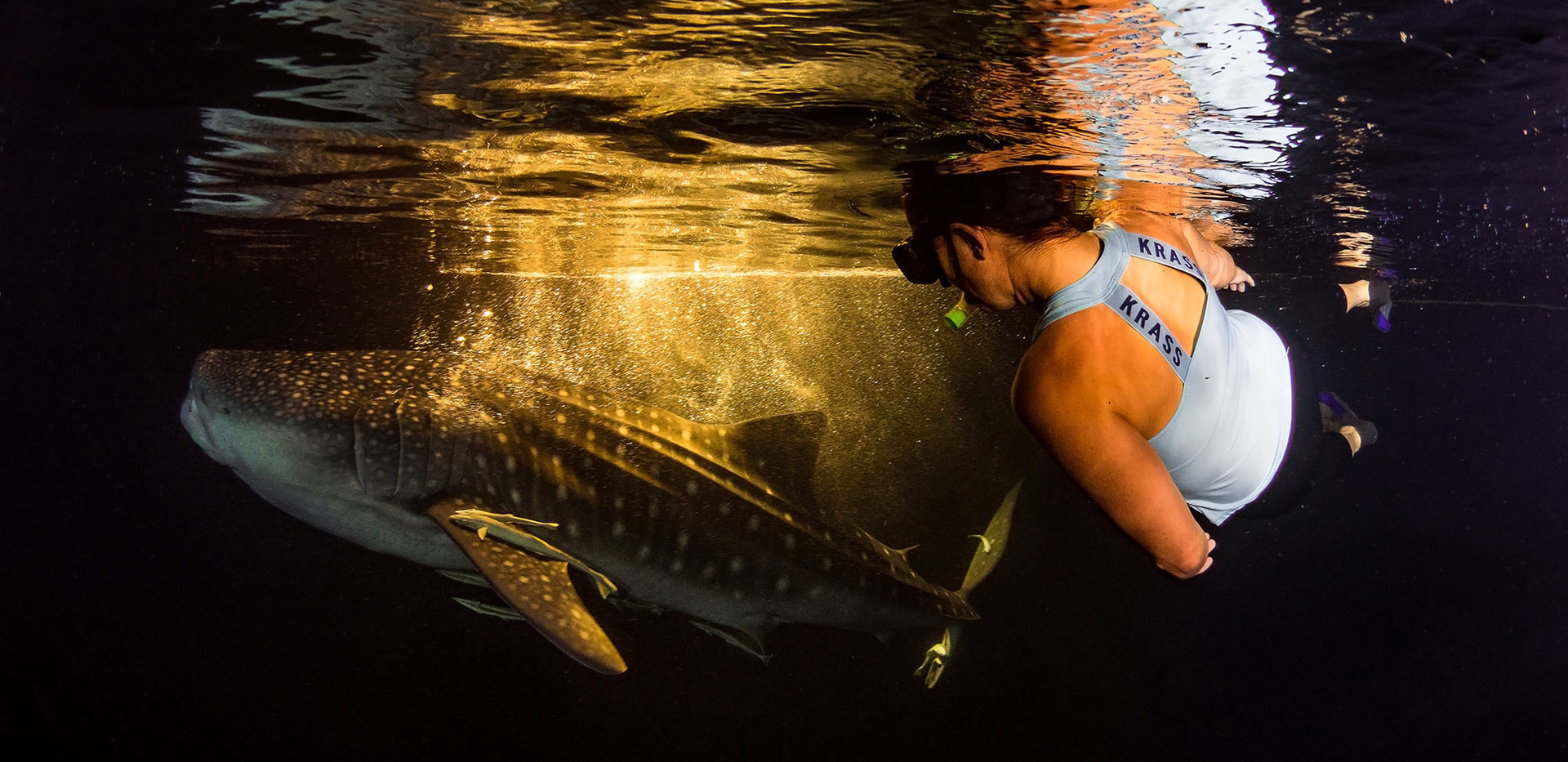 Whale shark by night