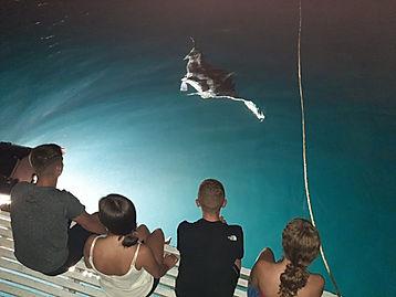 Manta Ray at the boat