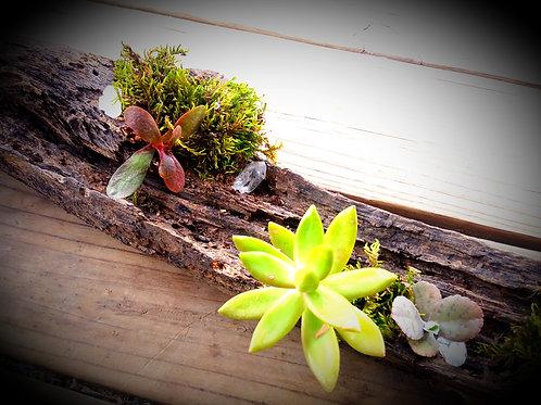 Succulent & Moss Centerpiece Logs