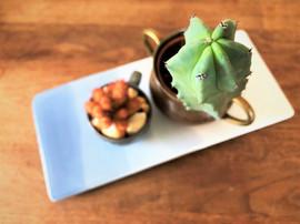1קקטוסים.  סטיילינג צמחים וצילום סוקולינה, בתוך פרויקט הום סטיילינג של חיית וינטאג.jpg
