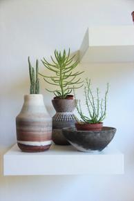 כלים וצמחים סוקולינה, צילום רונן טל1.JPG