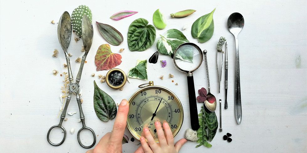 קורס הום סטיילינג עם צמחים במוזאוני חיפה