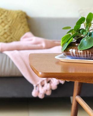 עיצוב הום סטיילינג עם צמחים פילאה pilea peperomioides
