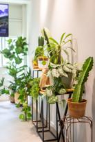קומפוזיציית צמחים, עץ וברזל בחדר הישיבות הגדול