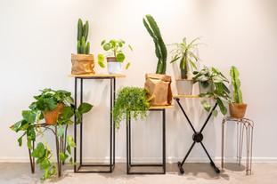 קומפוזיציית צמחים