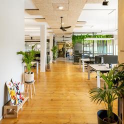 עיצוב צמחים למשרד סוקולינה