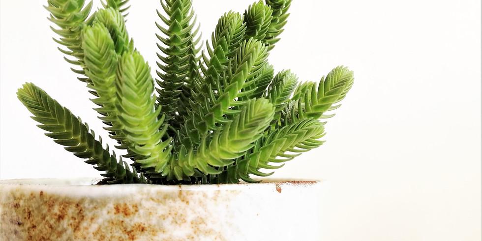 קורס צמחים עירוניים