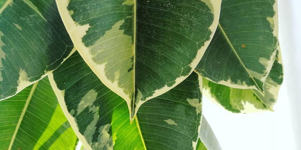סדנת סטיילינג וצילום צמחים
