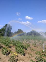 Irrigation - 10.jpg