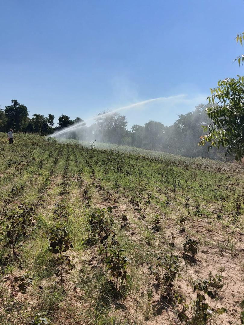 Irrigation - 20.jpg