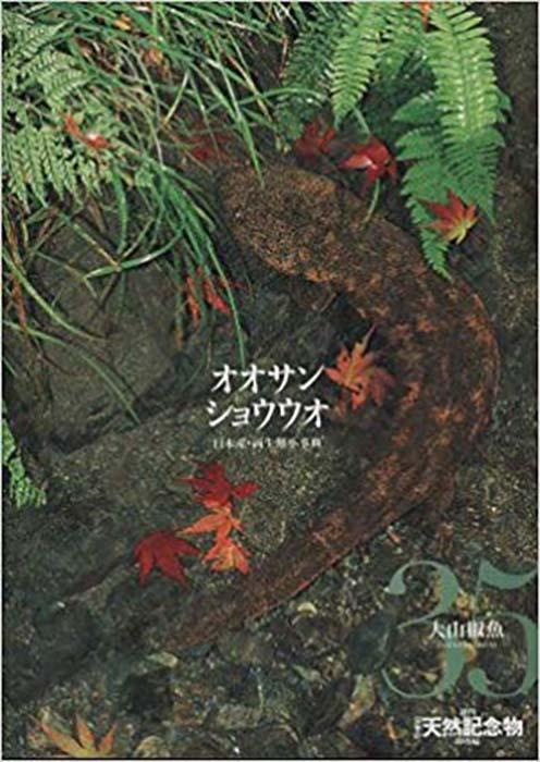 週刊 日本の天然記念物 動物編 オオサンショウウオ 35