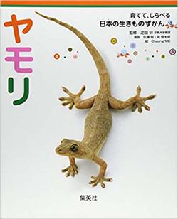 ヤモリ 育てて、しらべる 日本の生きものずかん 10
