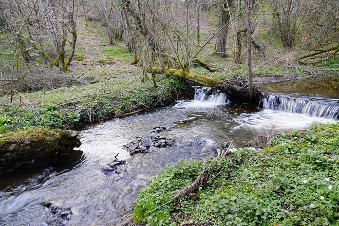 ruisseau vers la 'Petite Creuse'