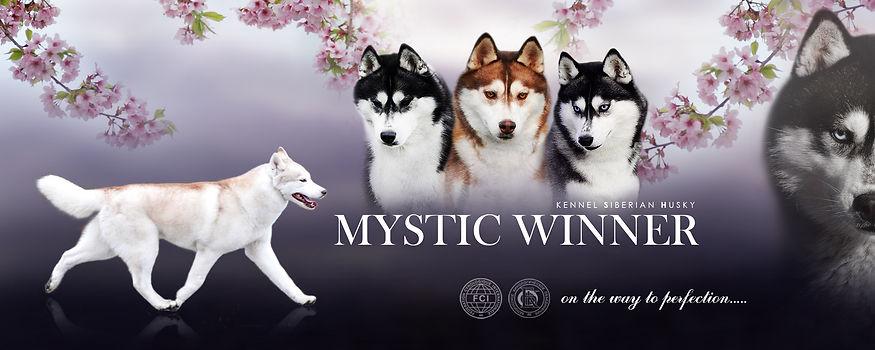 MYSTIC WINNER SIBERIANS 2.jpg