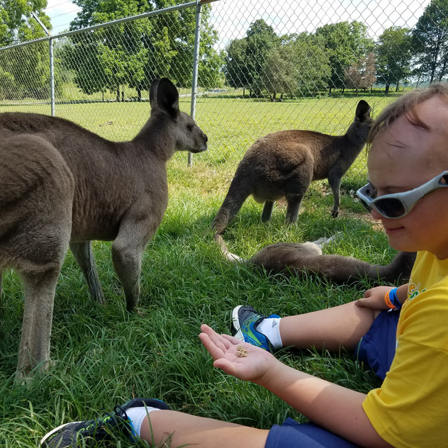 Pet a Kangaroo at Kentucky Down Under!