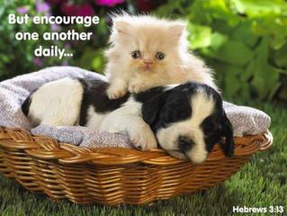 Forgive as God Forgives