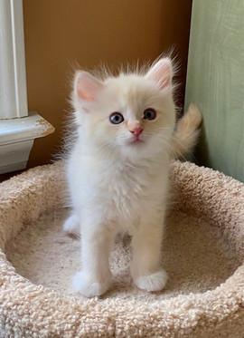 2021-kitty2.jpg