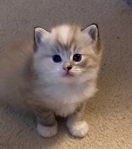 2020-kitty10.jpg
