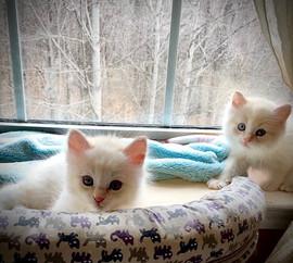 2021-kitty4.jpg