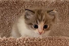 2020-kitty12.jpg