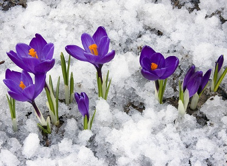 SPRING is on its way!